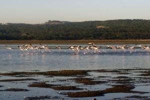 Paisagem Natural/Bailado na Lagoa
