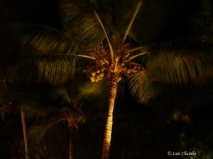 Paisagem Natural/Night Palm Tree
