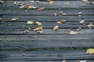 Outros/Folhas caídas...