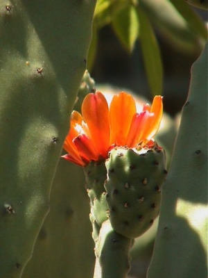 Paisagem Natural/first flower