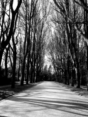 /Por este caminho a P&B