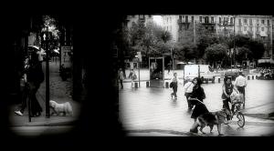 Gentes e Locais/Walkin'  the dog