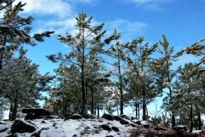 Paisagem Natural/Não é nos Alpes
