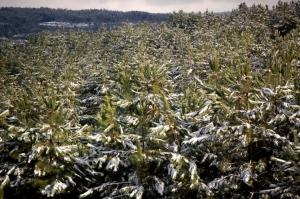 Paisagem Natural/Verde com algodão....