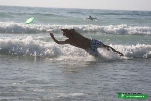Desporto e Ação/Frisbee - Eu