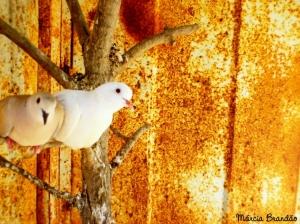 Animais/A (não) liberdade de voar