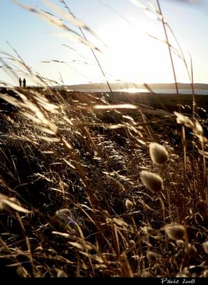 Paisagem Natural/Os Campos da Saudade