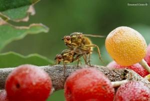 Macro/Paraiso das moscas
