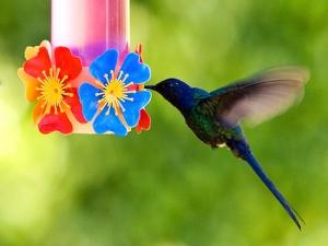 Animais/Bebedouro de pássaros I