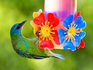 Animais/Bebedouro de pássaros II