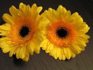 Outros/Belas e amarelas...