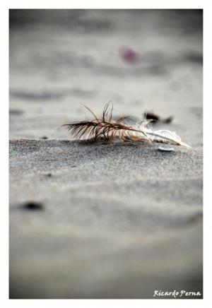 Paisagem Natural/Escrita na areia