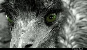 Animais/Olhos de Rapina