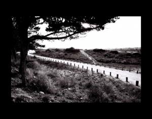 Gentes e Locais/caminho espinhoso