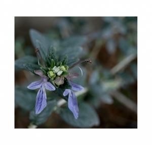 Macro/as primeiras flores...