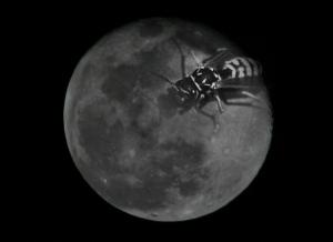 Arte Digital/the moon is mine