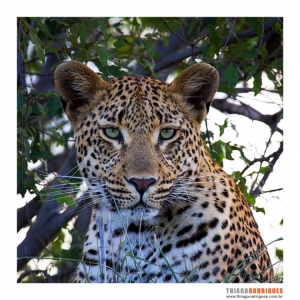Animais/Kruger