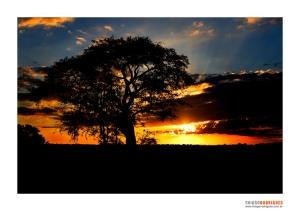 Paisagem Natural/Kruger