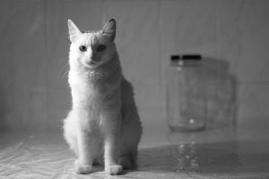 /Brad Pit - O Gato #1