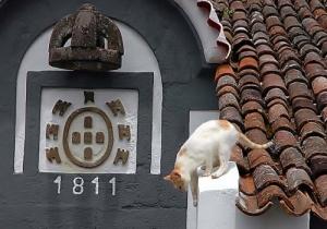 /Gato, gato, meu telhado não é cama...