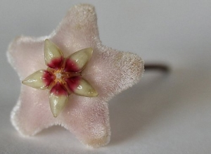 /Un fiore per Tanda Melo