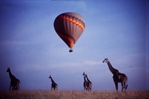 /Girafas em Masai Mara, Quênia