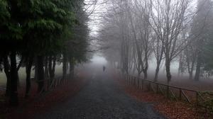 Paisagem Natural/Vindo da neblina