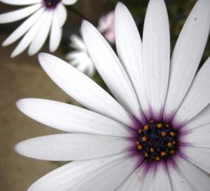 Outros/flor, flor ...