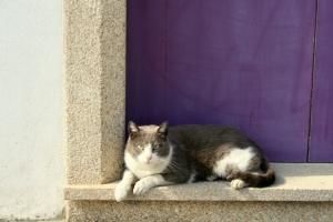 Animais/gato ao sol
