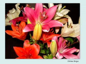 Outros/Um ramo de flores para vocês