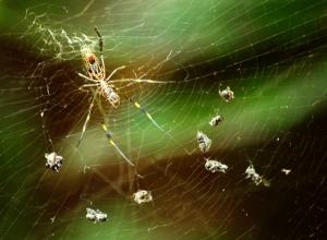 Animais/Aranha
