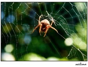 Outros/Nas teias da aranha