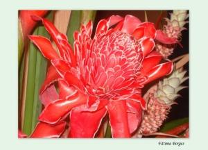 Outros/Flor de Porcelana