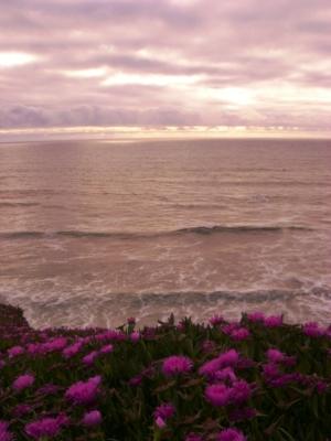 Paisagem Natural/Céu, mar e flores
