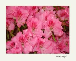 Macro/Flores do meu jardim
