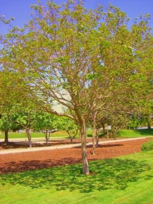 Paisagem Natural/Verde Primavera