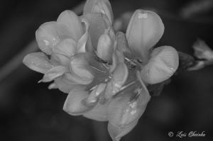 Macro/A preto e branco