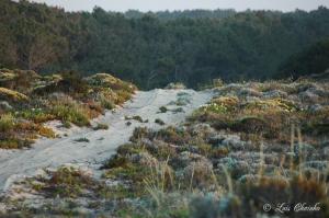 Paisagem Natural/Caminho nas dunas