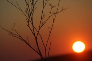Outros/O sol a fujir me
