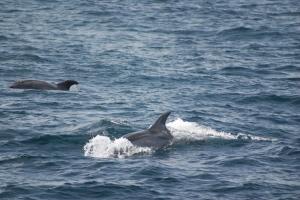 Outros/Golfinhos em Liberdade I