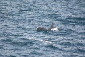 Outros/Golfinhos em Liberdade II
