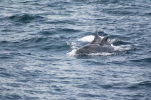 Outros/Golfinhos em Liberdade III