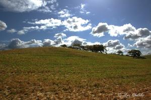 Paisagem Natural/Planicie Alentejana