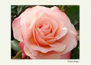 Macro/A paixão das flores