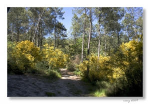 Paisagem Natural/A Serra em Flor