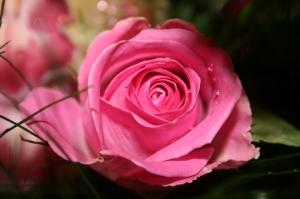 Outros/As Rosas tambem choram...