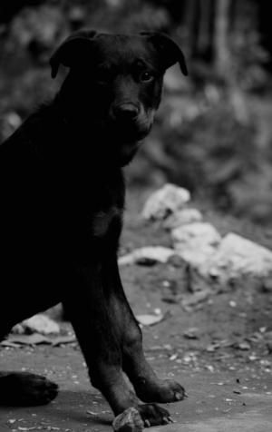 Animais/DOG