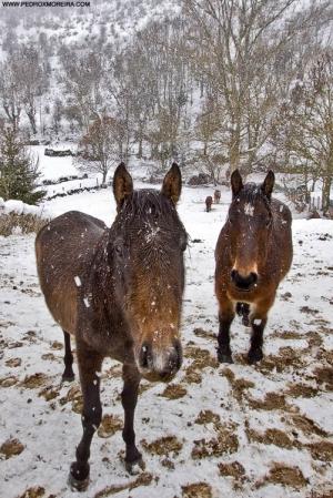 /Snow horses