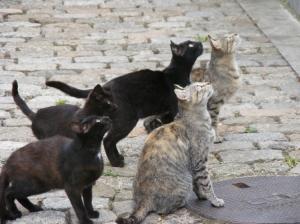 Animais/Os gatinhos de Melgaço