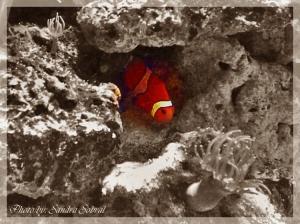 Outros/Encontrei o Nemo...